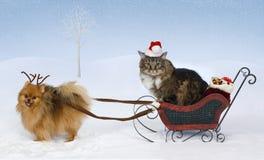 Kerstmis voor Maximum & Jolie royalty-vrije stock afbeelding