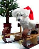 Kerstmis Westie Royalty-vrije Stock Afbeeldingen