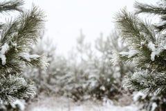 Kerstmisachtergrond, bomen in vage vorst, bokeh, nieuw jaar Royalty-vrije Stock Afbeeldingen