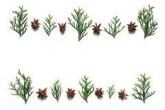 Kerstmisachtergrond met Anise Stars And Green Cypress-Takjes royalty-vrije stock afbeeldingen