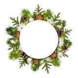 Kerstmisachtergrond met spartakken en kegels Vector eps-10 Royalty-vrije Stock Afbeeldingen