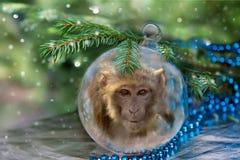 Kerstmisbal met aap Stock Afbeeldingen
