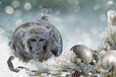 Kerstmisbal met aap op sneeuw Stock Afbeeldingen