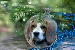 Kerstmisbal met brakhond onder Kerstmisboom Stock Afbeeldingen
