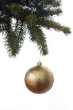 Kerstmisbal op de takkenspar Royalty-vrije Stock Afbeelding