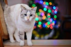 Kerstmisbeeld met de witte kat en de kleurrijke lichten Stock Afbeeldingen