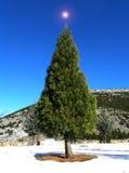 Kerstmisboom van de tuin Stock Afbeeldingen