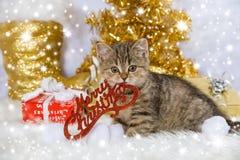 Kerstmisdecoratie van het gestreepte katkatje wirh Royalty-vrije Stock Afbeeldingen