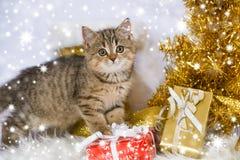 Kerstmisdecoratie van het gestreepte katkatje wirh Stock Afbeeldingen