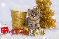 Kerstmisdecoratie van het gestreepte katkatje wirh Stock Foto's