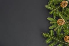 Kerstmisgrens - de boom vertakt zich met denneappels die op zwarte worden geïsoleerd, legt de Vlakte georiënteerde het recht van  stock afbeeldingen