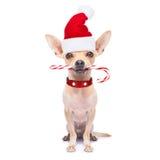 Kerstmishond als Kerstman Royalty-vrije Stock Afbeeldingen