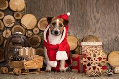 Kerstmishond in gnoomkostuum, royalty-vrije stock afbeeldingen