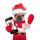 Kerstmishond het winkelen Stock Foto