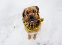 Kerstmishond op de sneeuw die slinger dragen Royalty-vrije Stock Fotografie