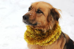 Kerstmishond op de sneeuw die slinger dragen Royalty-vrije Stock Afbeeldingen