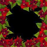 Kerstmiskader van poinsettiabloemen stock fotografie