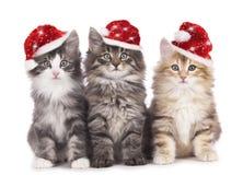 Kerstmiskatje Royalty-vrije Stock Afbeeldingen