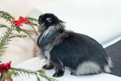 Kerstmiskonijn Royalty-vrije Stock Afbeelding
