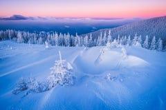 Kerstmislandschap met spar in de sneeuw Stock Afbeelding