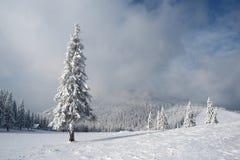 Kerstmislandschap met sparren in de bergen Royalty-vrije Stock Foto
