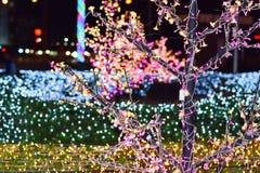 Kerstmislicht op een boom met onduidelijk beeld lichte achtergrond Royalty-vrije Stock Foto's