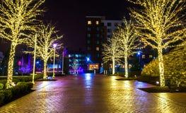 Kerstmislichten op bomen langs een weg in Nationale Haven, Maryl Stock Foto