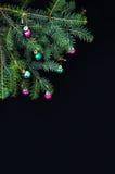 Kerstmisornamenten en pijnboomtakken op zwarte achtergrond Purpere en groene Kerstmisballen op groene nette tak De ballen van Ker Stock Foto's