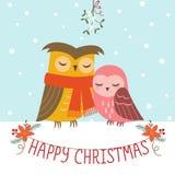 Kerstmispaar van uilen Stock Foto's