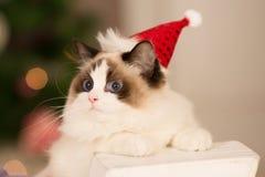 Kerstmispartij, de vrouw van de de wintervakantie met kat Het meisje van het nieuwjaar Royalty-vrije Stock Foto's