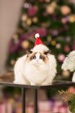 Kerstmispartij, de vrouw van de de wintervakantie met kat Het meisje van het nieuwjaar Stock Foto