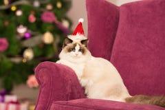 Kerstmispartij, de vrouw van de de wintervakantie met kat Het meisje van het nieuwjaar Stock Afbeelding