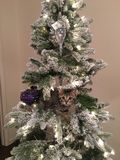 Kerstmispot stock foto's