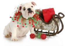 Kerstmispuppy Stock Afbeeldingen