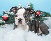 Kerstmispuppy stock afbeelding