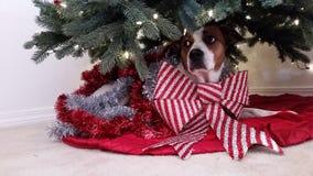 Kerstmispuppy Stock Foto