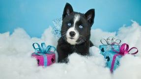 Kerstmispuppy Royalty-vrije Stock Foto