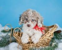 Kerstmispuppy Stock Foto's
