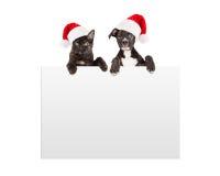 Kerstmispuppy en Kitten Hanging Over Sign royalty-vrije stock afbeeldingen