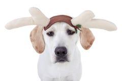 Kerstmisrendier royalty-vrije stock afbeelding