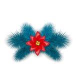 Kerstmissamenstelling met blauwe spartakjes en bloempoinsettia, Royalty-vrije Stock Afbeelding