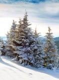 Kerstmisspar met sneeuwachtergrond van bergen Zonnige dag, wint Royalty-vrije Stock Foto's