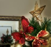 Kerstmisster op boom Royalty-vrije Stock Foto