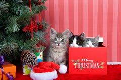 Kerstmistrio van katjes royalty-vrije stock afbeeldingen