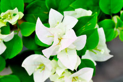 Kertas, fleur de papier Photos stock