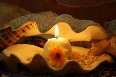 Kerze in einem Shell Stockbilder