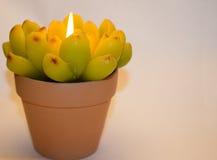 Kerze in Form einer Blume Stockfotografie