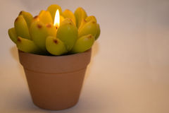 Kerze in Form einer Blume Stockbild