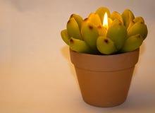 Kerze in Form einer Blume Stockfoto
