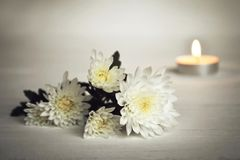 Kerze und weiße Blumen stockbild